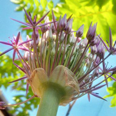 User story: flowering future forward