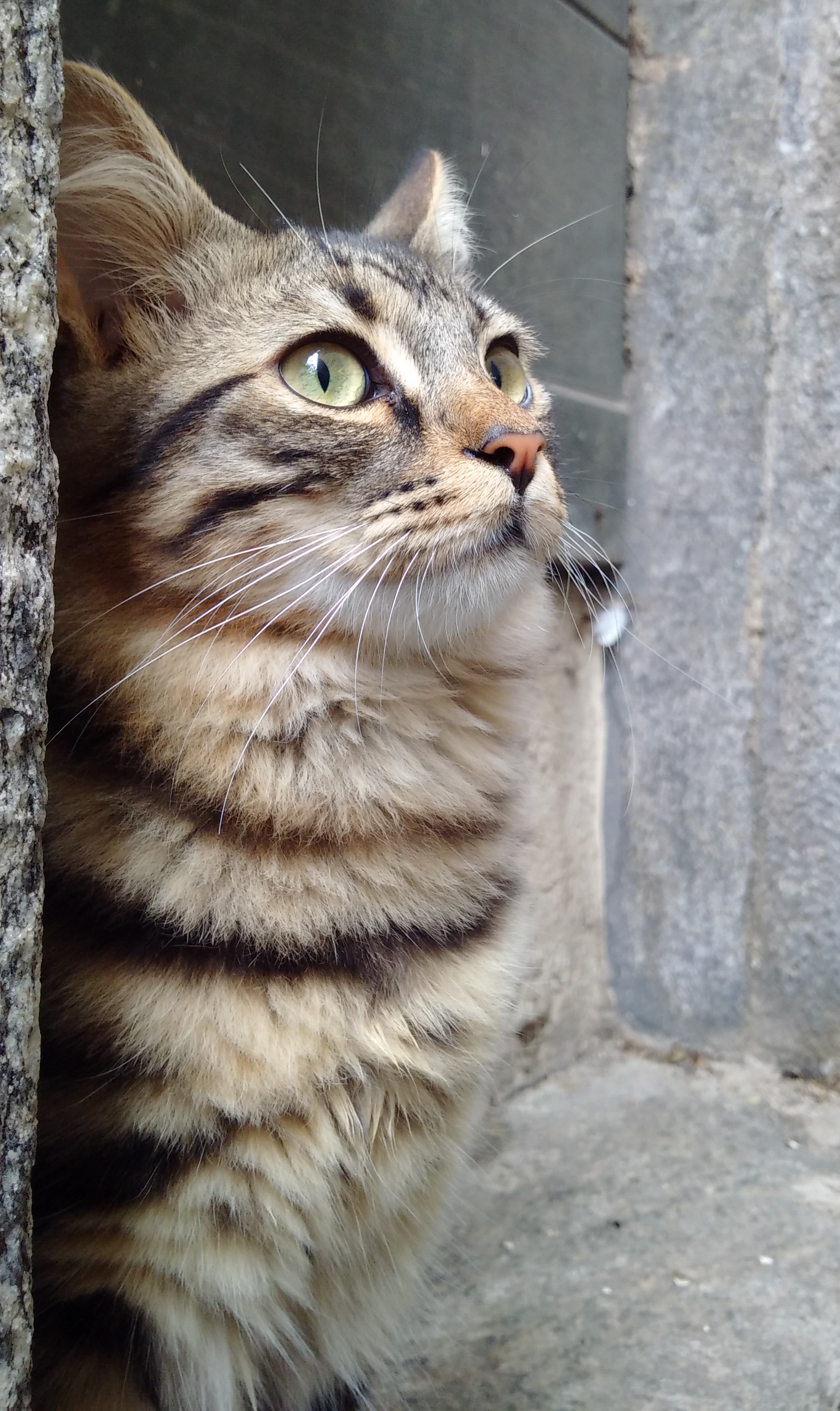 Stray cat in Switzerland photographed with the Blackberry Passport